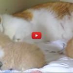 Che cos'è l'amore? Ce lo insegna mamma gatta [VIDEO]
