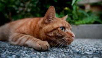 Uboat, il gatto vedovo inconsolabile