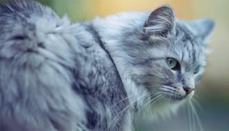 I 6 errori umani che fanno arrabbiare il gatto