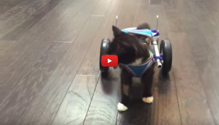studenti progettano sedia a rotelle in 3d per il gatto