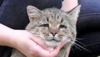 Mikesh, il gatto con lo sguardo triste causato dalle botte