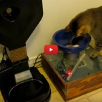 Monkey, il gatto nerd più intelligente di un cervellone [VIDEO]