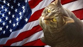 Il gatto Limberbutt Mc Cubbins candidato alla Casa Bianca