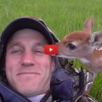 Uomo salva cerbiatto, ne nasce una splendida amicizia [VIDEO]