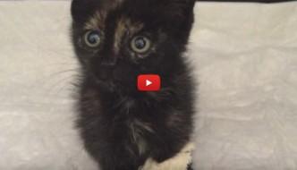 Agata, la gattina fortunata che ha percorso 500 Km