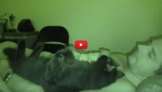 E tu lasci dormire il gatto nel tuo letto? [VIDEO]