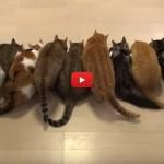 Aggiungi un gatto a tavola! [VIDEO]
