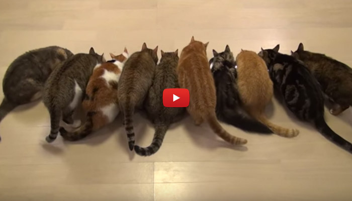 Aggiungi un gatto a tavola video - Se sposti un posto a tavola ...