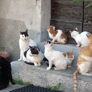 Lite familiare strage di gatti per vendetta for Youtube cani e gatti