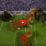 Coppa del mondo di Rugby… coi gattini! [VIDEO]