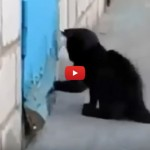 Cagnolino rinchiuso, gatto lo aiuta a scappare [VIDEO]