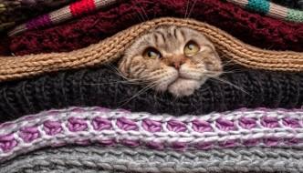 Ecco l'autunno: proteggiamo il gatto dai primi freddi