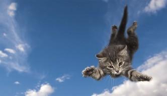 Gatto sopravvive a una caduta di 125 metri da una scogliera