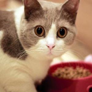 gatto vegetariano