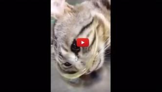 Le lacrime della gatta salvata commuovono il web [VIDEO]
