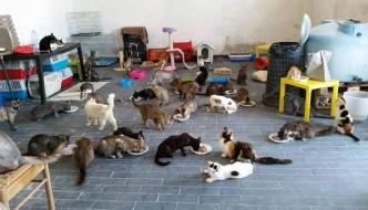 Riqualificato il gattile lager a Quartu