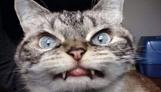 Il gatto-vampiro Loki ha fatto innamorare il web