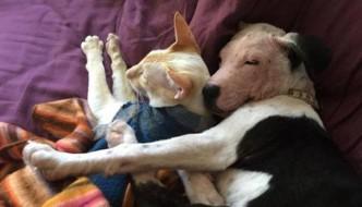 Gatto sceglie una cagnetta salvata dell'eutanasia come compagna di vita