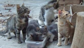 A Udine un'ex caserma diventa un rifugio per gatti
