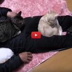 6 gatti catturano il loro umano [VIDEO]