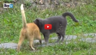 Red e Willy, i due gatti che vivono in simbiosi [VIDEO]