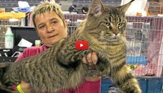 È il gatto Titanic la star del SuperCat Show di Roma [VIDEO]