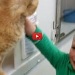 Bimbo vuole adottare un gatto, ma al rifugio ritrova il suo [VIDEO]