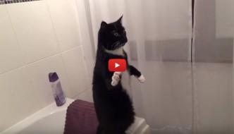 Studente riesce a pagare la retta grazie ai video del suo gatto [VIDEO]