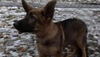 Dopo Diesel, la Russia regala un cucciolo alla Francia