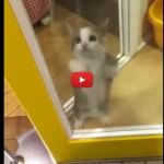 Il suo umano torna da lavoro, incontenibile la gioia del gattino [VIDEO]
