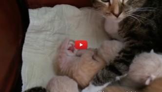 Louis, il gattino di 6 giorni impara a pulirsi la zampetta