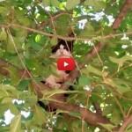 Gatto non sa scendere dall'albero: salvato grazie a una borsa [VIDEO]