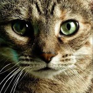 gatto anima