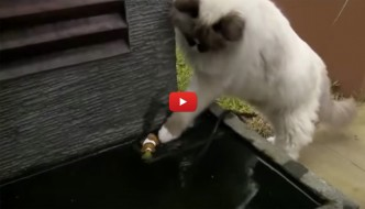Gatto rimette pesciolino Nemo in acqua e lo salva [VIDEO]