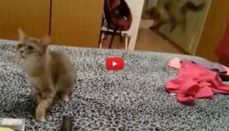 Gatto starnutisce e fa spaventare l'amico [VIDEO]