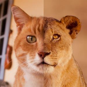 leoni gatti