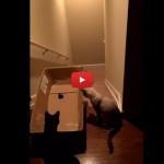 Uno scherzo di cattivo gusto fatto al proprio gatto [VIDEO]