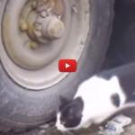 Il topo si mimetizza e il gatto non riesce a trovarlo [VIDEO]