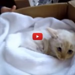 Trovano gattino congelato: sembra morto, ma poi… [VIDEO]
