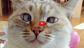 Muni, il gatto randagio strabico che fa impazzire il web [VIDEO]
