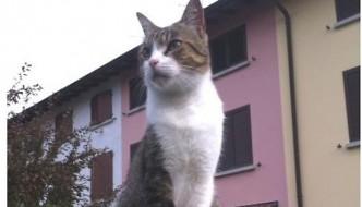 La storia di Teo, un gatto chiamato Pandoro