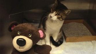Donna senzatetto salva e accudisce un gatto abbandonato