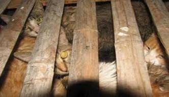 Ancora orrore in Cina: cani e gatti usati per pellicce
