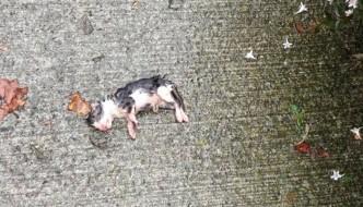Trova un gattino in fin di vita sotto la pioggia e lo salva