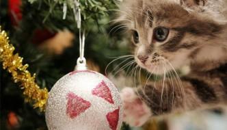 Vantaggi e svantaggi di essere un gatto a Natale