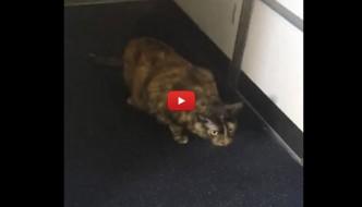 L'annuncio della hostess: «C'è un gatto a bordo!» [VIDEO]