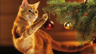 Come realizzare un albero di Natale a prova di gatto
