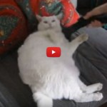 L'arte dell'ozio: gatto si rilassa con l'aspirapolvere [VIDEO]