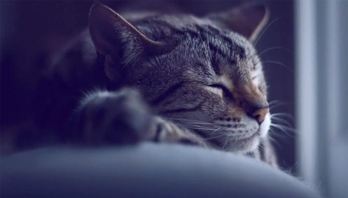 Dormire Con Il Gatto Migliora Il Nostro Riposo