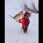 Mai dare le spalle a un gatto! [VIDEO]